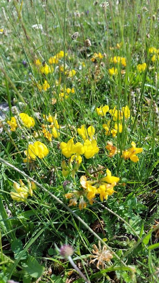 Flores amarelas bonitas fotos de stock royalty free