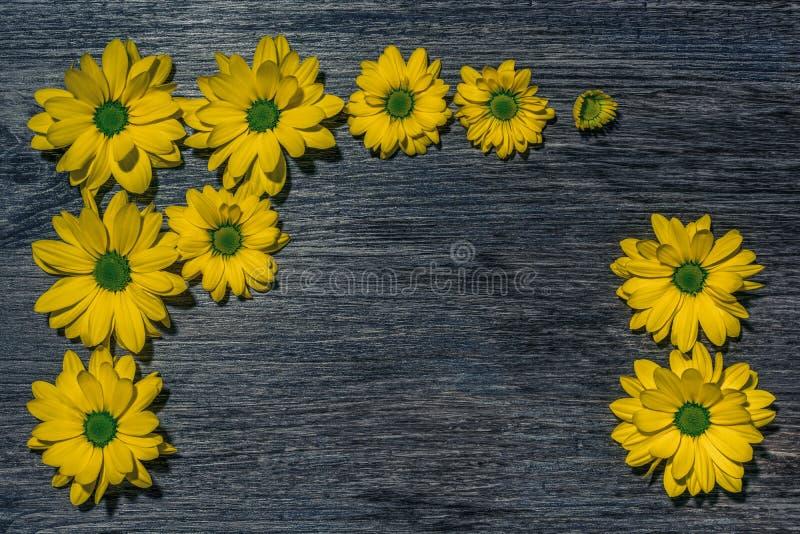 Flores amarelas brilhantes em um fundo de madeira marrom fotografia de stock