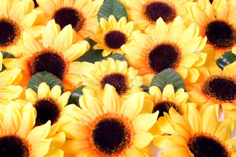 Flores amarelas coloridas imagens de stock royalty free
