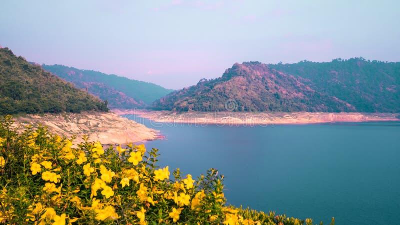Flores amarelas coloridas na flor, na água do lago e no fundo do céu azul fotos de stock