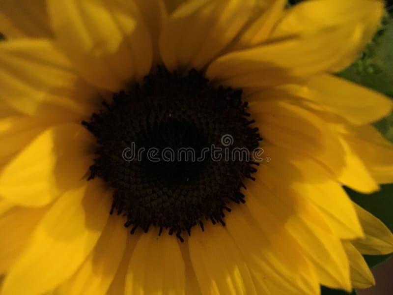 Flores amarelas: Cor da inveja fotos de stock royalty free