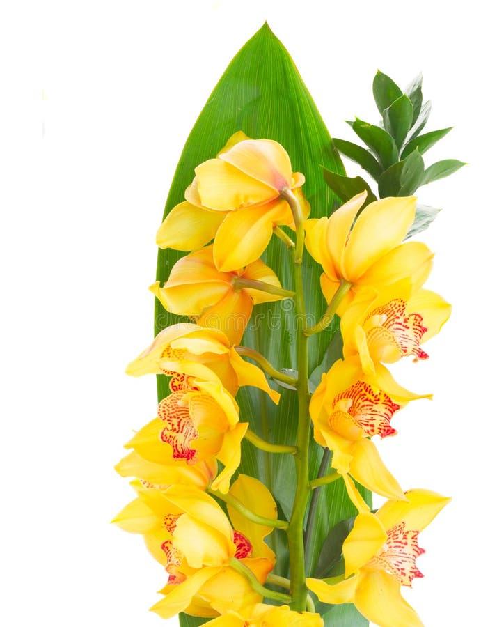 Flores amarelas da orquídea fotografia de stock