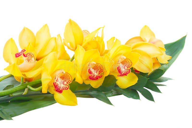 Flores amarelas da orquídea foto de stock royalty free
