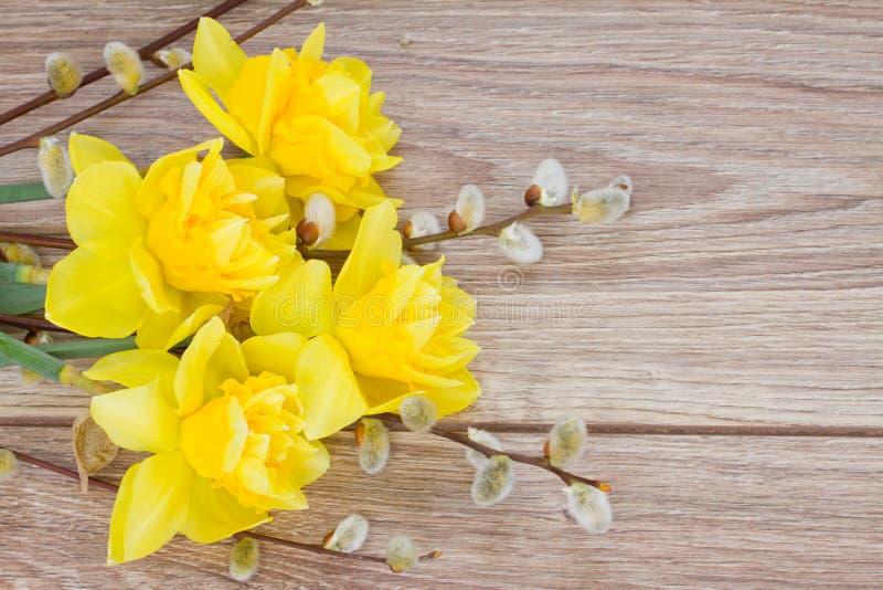 Flores amarelas do narciso com amentilhos imagem de stock
