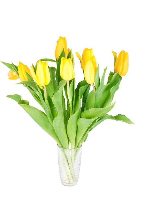 Flores amarelas do tulip imagens de stock