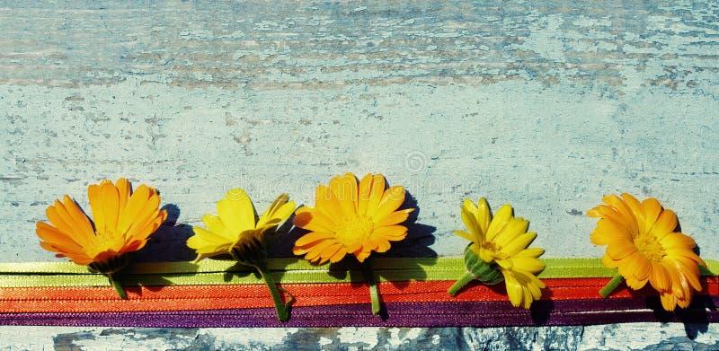 Flores amarelas do verão de um cravo-de-defunto em uma superfície de madeira Flores do Calendula imagens de stock