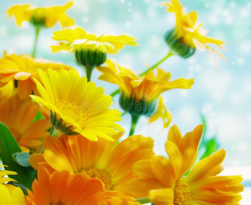 Flores amarelas do verão do ramalhete de um cravo-de-defunto imagem de stock royalty free