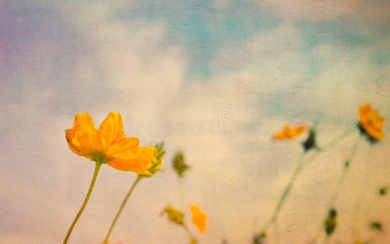 Flores amarelas do vintage no papel velho fotografia de stock royalty free