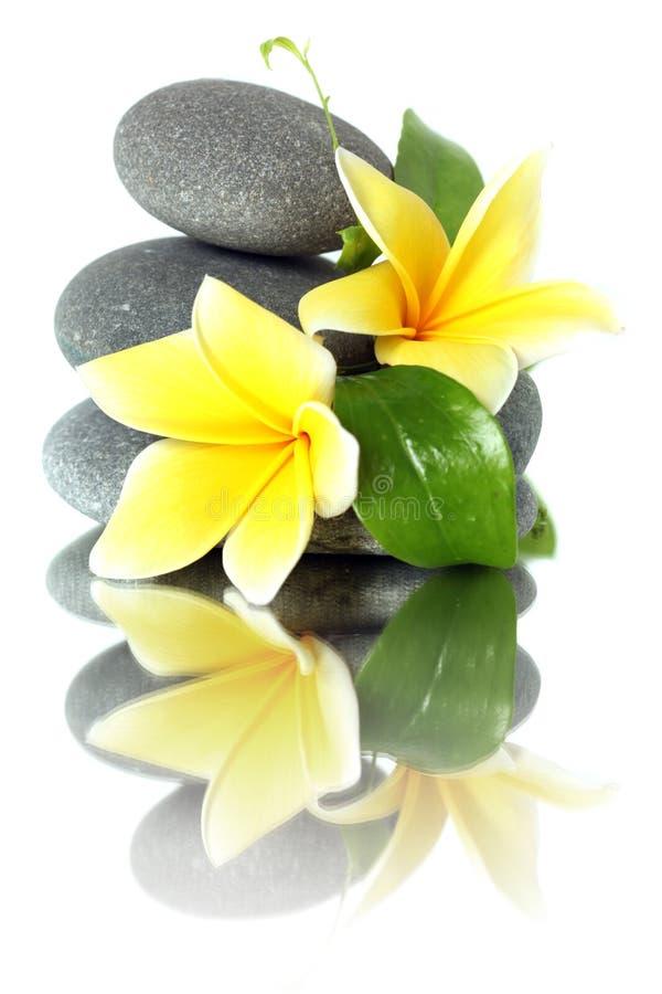 Flores amarelas em pedras empilhadas fotos de stock royalty free