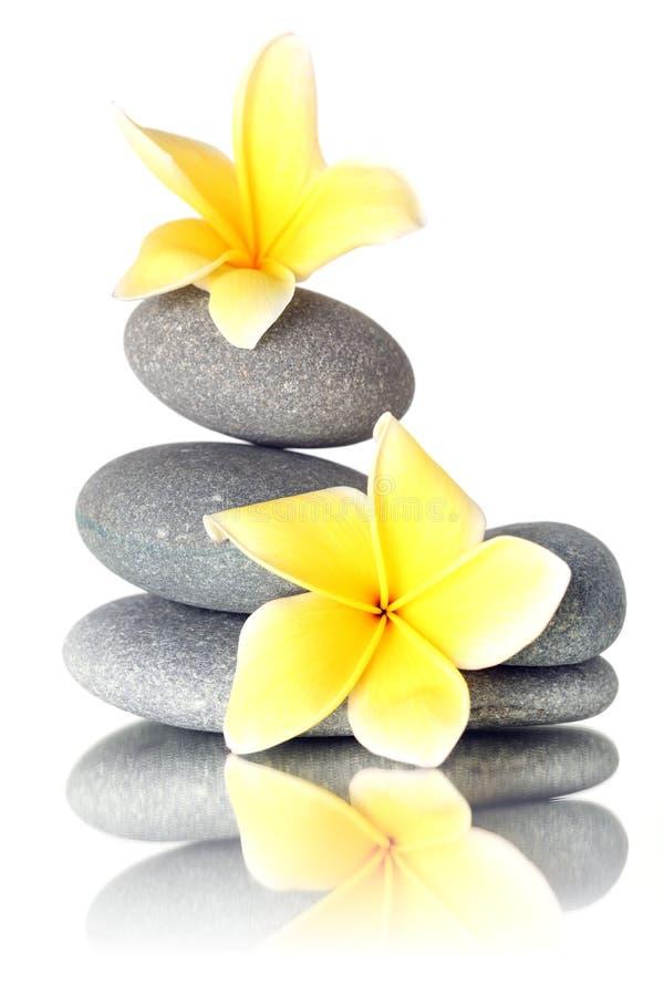 Flores amarelas em pedras empilhadas fotos de stock