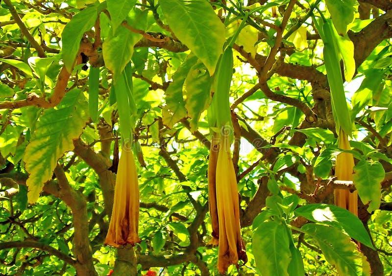 Flores amarelas em uma ?rvore fotografia de stock royalty free