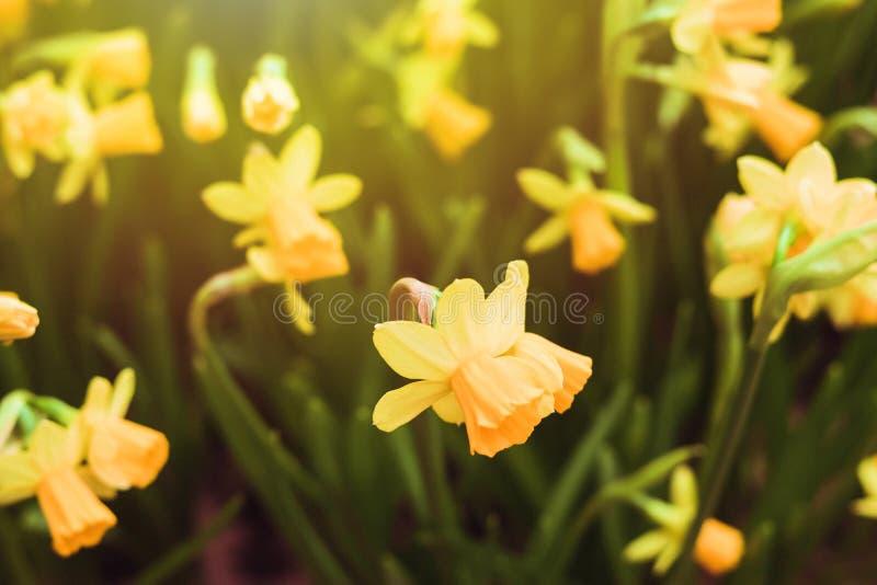 Flores amarelas exteriores imagens de stock royalty free