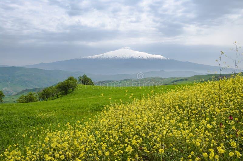 Flores amarelas, grama verde e montanha branca foto de stock royalty free