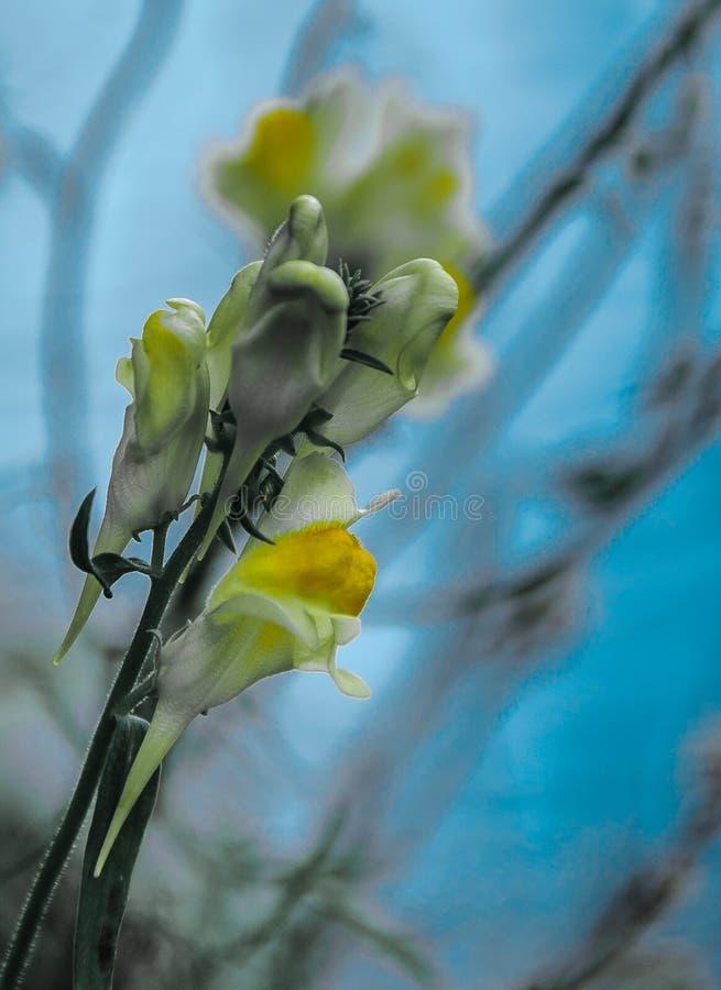 Flores amarelas macro 1 fotos de stock royalty free