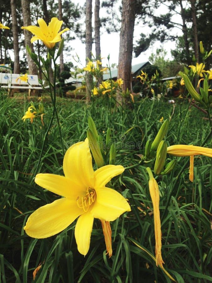 Flores amarelas na floresta fotos de stock
