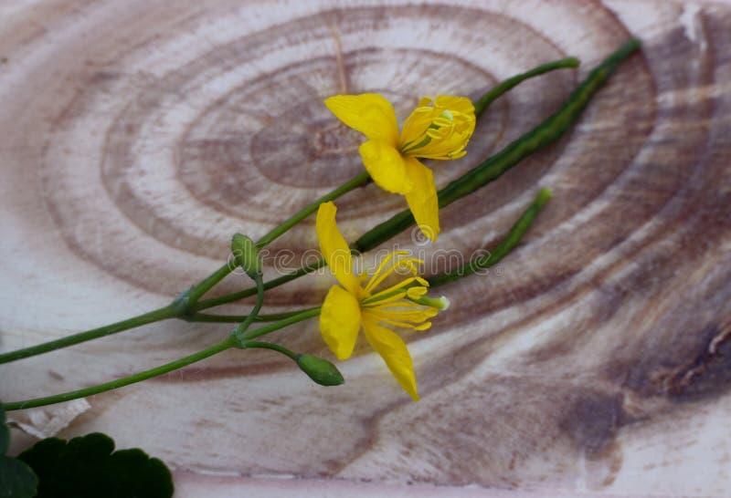 Flores amarelas na placa de madeira com estrutura bonita foto de stock