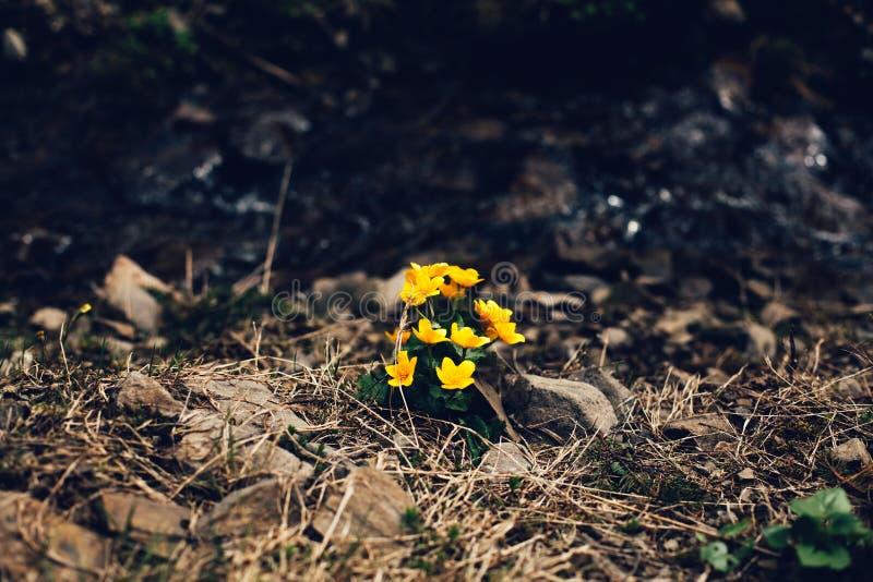 Flores amarelas na terra imagens de stock