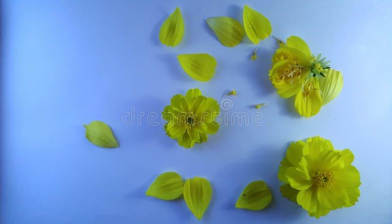 Flores amarelas no fundo textured branco foto de stock