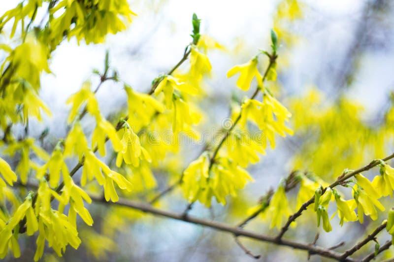 Flores amarelas para o screensaver ou o fundo nave imagem de stock