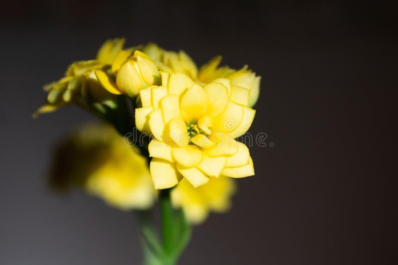 Flores amarelas pequenas do ramo agradável fotografia de stock royalty free