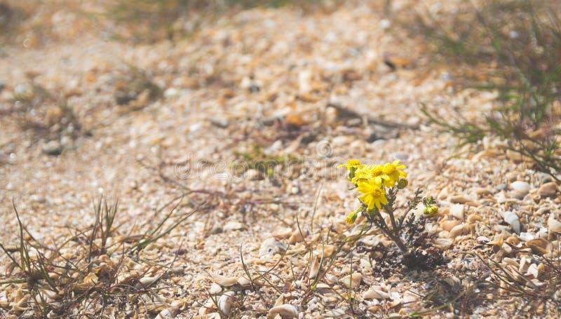 Flores amarelas pequenas entre os shell imagem de stock