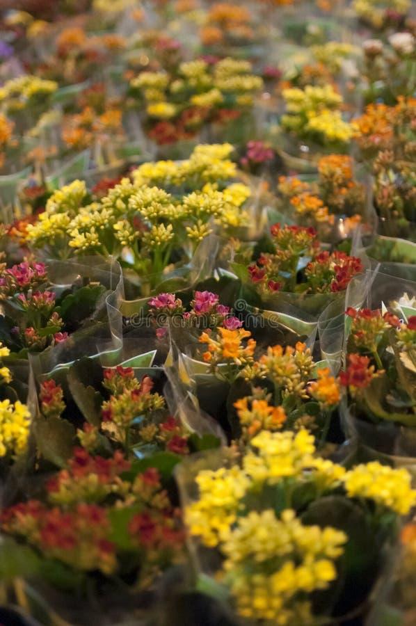 Flores amarelo e vermelho imagens de stock