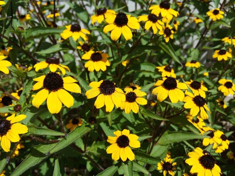 Flores amarillas imagenes de archivo