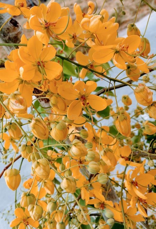Flores Amarillas zdjęcia stock