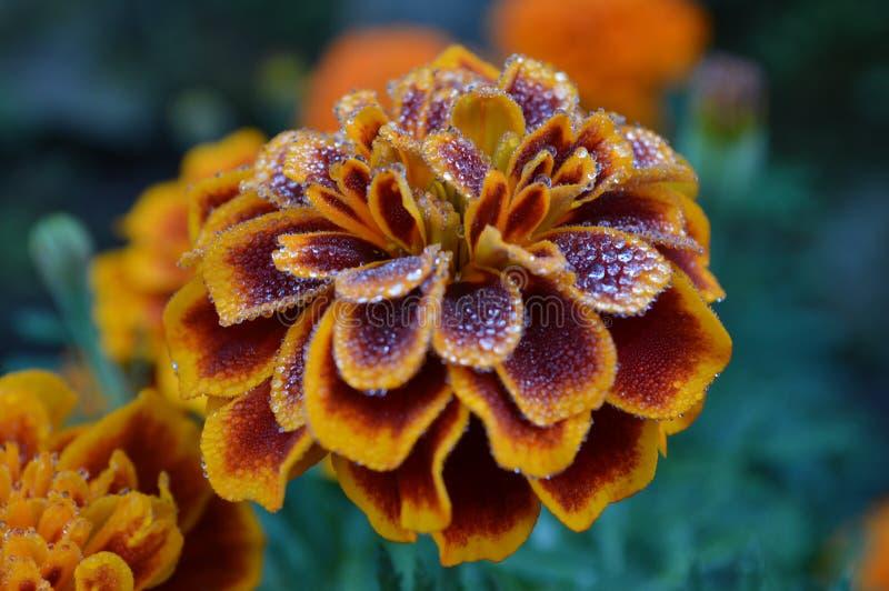 Flores amarillas fotos de archivo libres de regalías