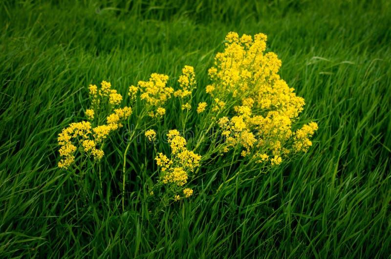 Flores amarillas brillantes en el verano foto de archivo