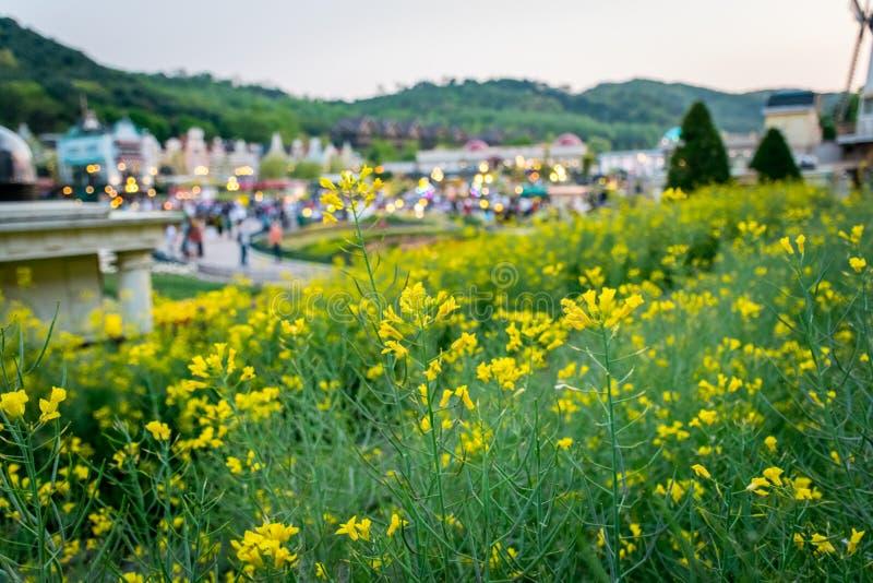 Flores amarillas con el parque de atracciones en fondo imágenes de archivo libres de regalías