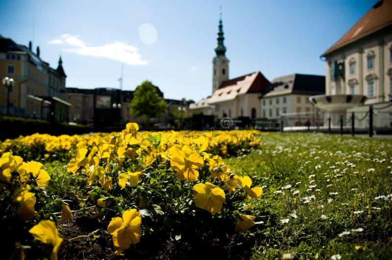 Flores amarillas con la iglesia imagen de archivo