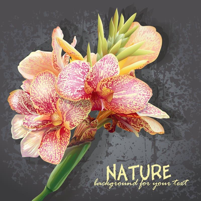 Flores amarillas con las manchas rosadas Las flores les gusta orquídeas ilustración del vector