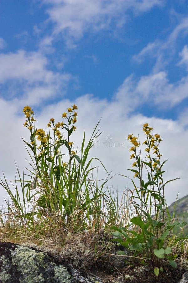Flores amarillas contra la perspectiva del cielo imagen de archivo