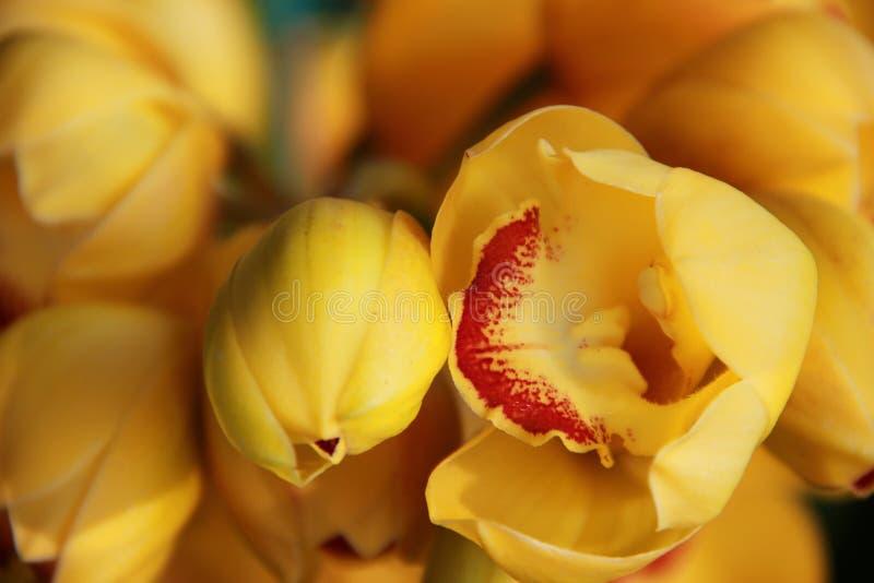 Flores amarillas de la orquídea imagen de archivo