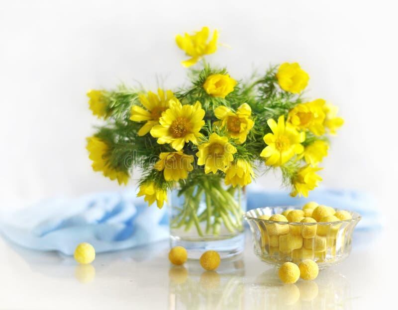 Flores amarillas de la primavera en un florero fotos de archivo libres de regalías