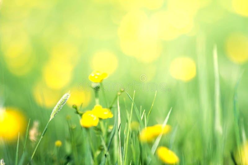 Flores amarillas de la primavera en un fondo de la hierba verde Flores en su foto de archivo