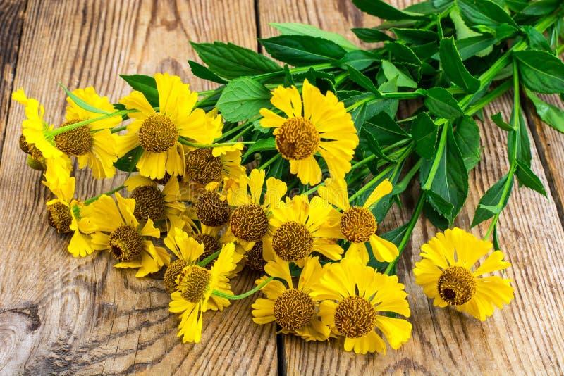 Flores amarillas del jardín del helenium fotos de archivo libres de regalías