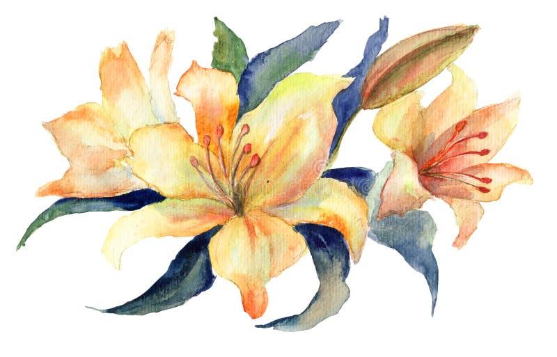 Download Flores amarillas del lirio stock de ilustración. Imagen de decorativo - 26285180