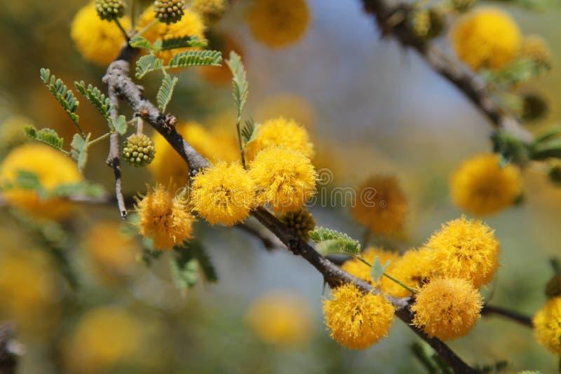 Flores amarillas en árbol imagenes de archivo