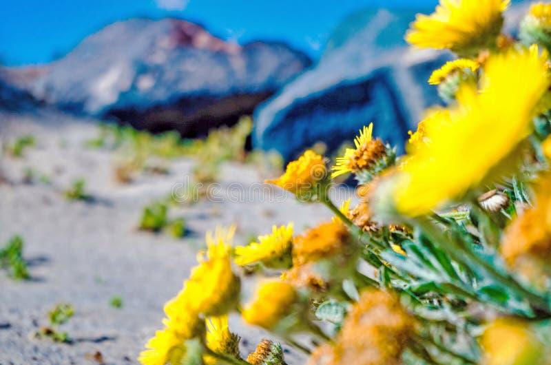 Flores amarillas en agua imagen de archivo