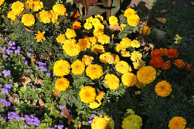 Flores amarillas en el parque foto de archivo libre de regalías