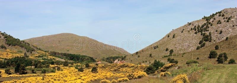 Flores amarillas en el prado en un día claro del cielo fotos de archivo