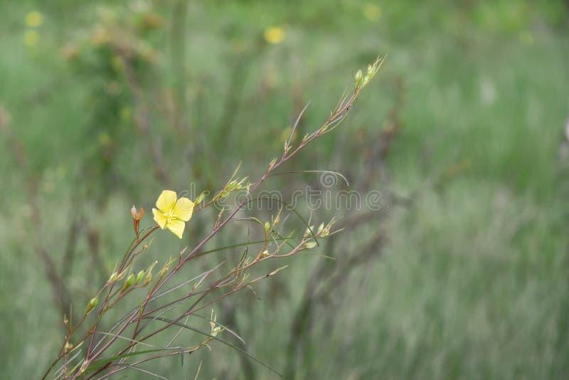 Flores amarillas en fondo verde fotos de archivo