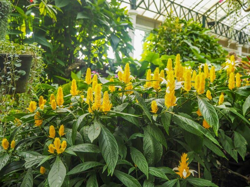 Flores amarillas en jardín interior fotografía de archivo