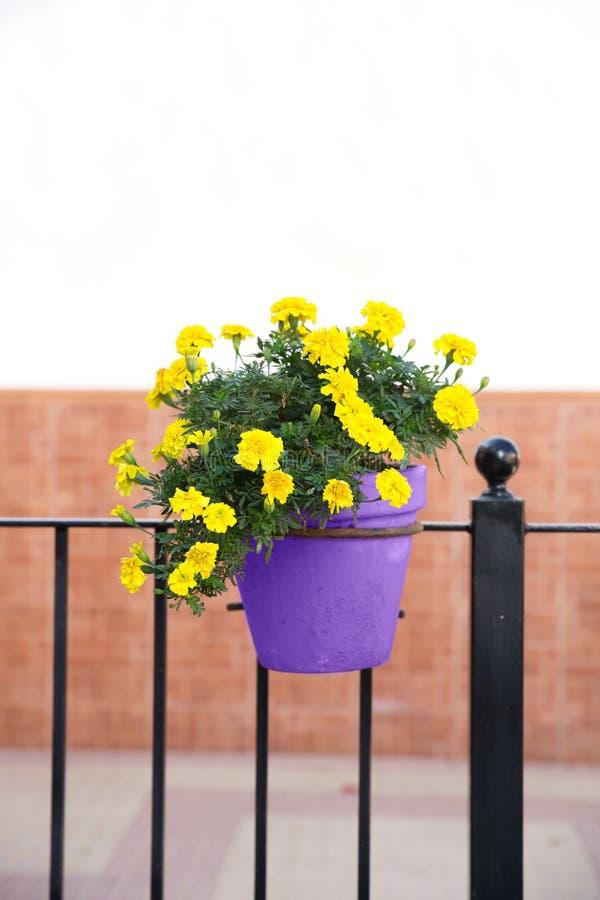 Flores amarillas en la maceta ultravioleta fotos de archivo