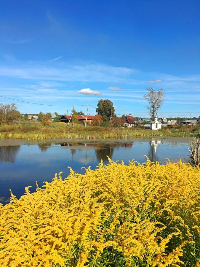 Flores amarillas en un fondo del lago y del cielo azul foto de archivo libre de regalías