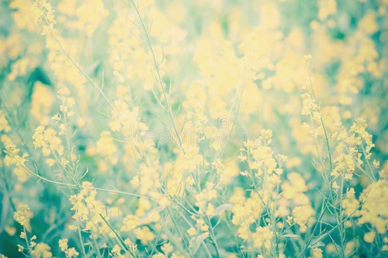 Flores amarillas hermosas fotos de archivo libres de regalías