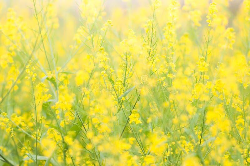 Flores amarillas hermosas fotografía de archivo libre de regalías