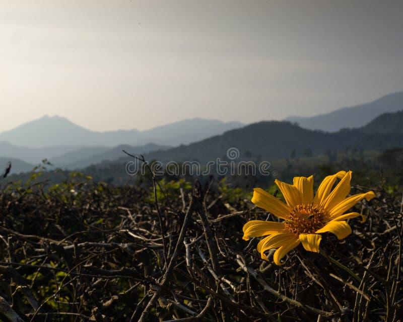 Flores amarillas hermosas con el lanscape de las montañas como fondo fotos de archivo libres de regalías